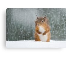 Red Squirrel in the Snow Metal Print