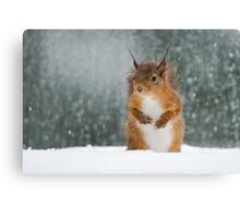 Red Squirrel in the Snow Canvas Print