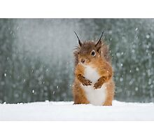 Red Squirrel in the Snow Photographic Print
