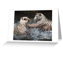 White Tigers Play Fighting Greeting Card
