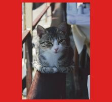 Cute Tabby Cat - Sitting On The Fence Baby Tee