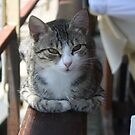 Cute Tabby Cat - Sitting On The Fence by taiche