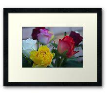 Coloured Roses  Framed Print