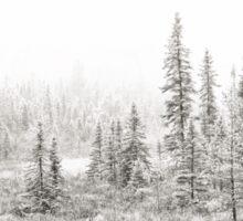 Algonquin Ice - Algonquin Park, Canada Sticker