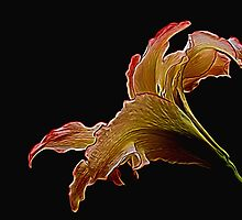Painted Lily by Judy Vincent