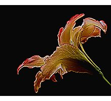 Painted Lily Photographic Print