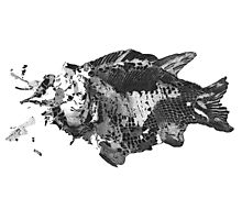 Prehistoric Fossil Fish Photographic Print