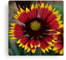 Indian Blanket Square Canvas Print