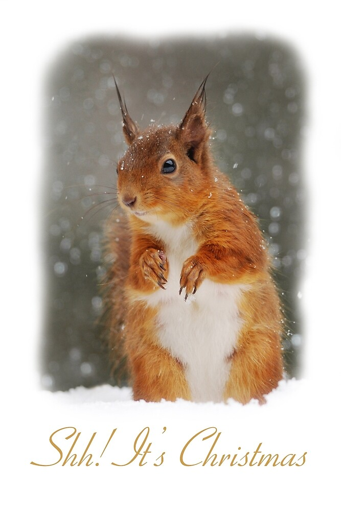 Quot Red Squirrel Christmas Card Quot By Nigel Tinlin Redbubble