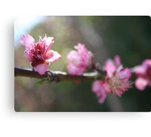 A Bough Of Blurred Peach Blossom Canvas Print