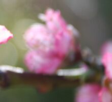 A Bough Of Blurred Peach Blossom Sticker