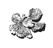 Decay - Flower Photographic Print