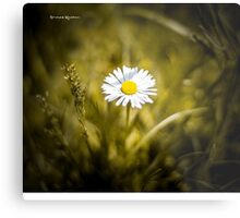 The lonely daisy Metal Print