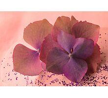 Paper Petals Photographic Print