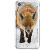 Winter Red Fox iPhone Case/Skin