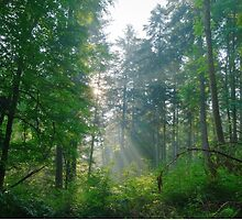 Beuty forest with sunrays in the morning by juras