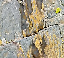 Blue Rocks and Lichen by Peter J Sucy