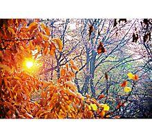Shining Through The Rust Photographic Print