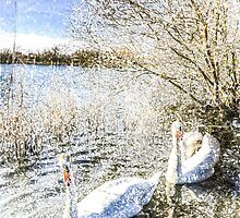 Snow Swans Art by DavidHornchurch