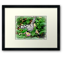 The Common Mime Butterfly on flowers Framed Print