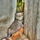 Kitty Kameleon by jewelskings