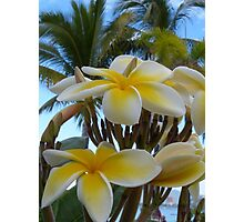 tropical zone - zona tropical Photographic Print