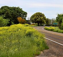 Country Road by Judy Vincent