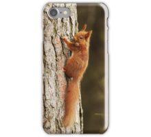 Red Squirrel Climbing Pine Tree iPhone Case/Skin
