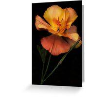 Silky peach coloured Californian Poppy Greeting Card