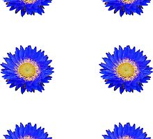 Daisy - Blue and Yellow by STHogan