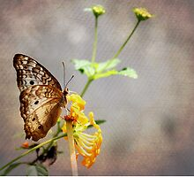 Vintage Butterfly by Judy Vincent