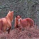 New Forest Ponies by RedHillDigital
