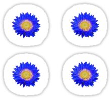 Daisy - Blue and Yellow Sticker