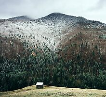 Cabin in the woods by Orce