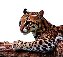 Ocelot Painted 2 by Judy Vincent
