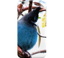 Steller's Jay iPhone Case/Skin