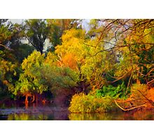 Water Forest Photographic Print