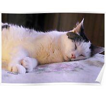 Munchkin Sleeping ♥ Poster