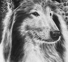 Rough Collie Dog  by artddicted