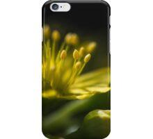 Aeonium Arboreum (Crassulaceae) iPhone Case/Skin
