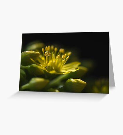 Aeonium Arboreum (Crassulaceae) Greeting Card