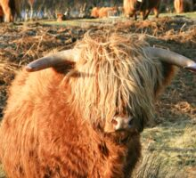 Highland Cow - Highland Cattle - Highlander Sticker