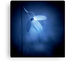 Flower - wildflower in blue (2015) Canvas Print