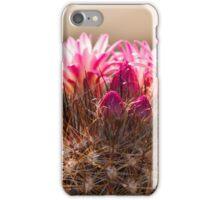 succulent plant in the garden iPhone Case/Skin