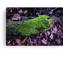 Woodland Autumn Moss On A Log Canvas Print