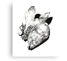 Natural History - Fish Canvas Print