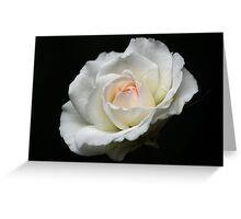 The White Rose with a Hint of Pink Greeting Card