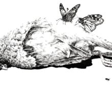 Natural History - Bird Sticker