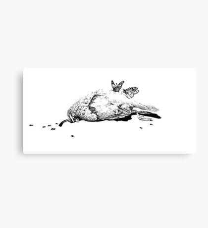 Natural History - Bird Canvas Print