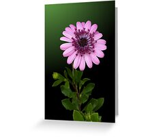 Study in Pink and Green Greeting Card